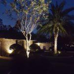 landscape lighting up lighting trees