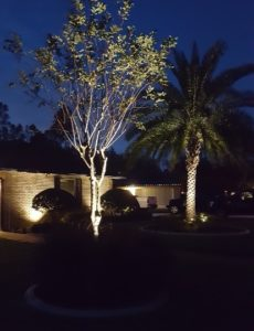 landscape lighting up lighting trees