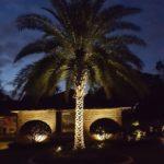 palm tree landscape lighting