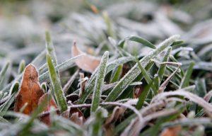 frost bitten grass, landscape