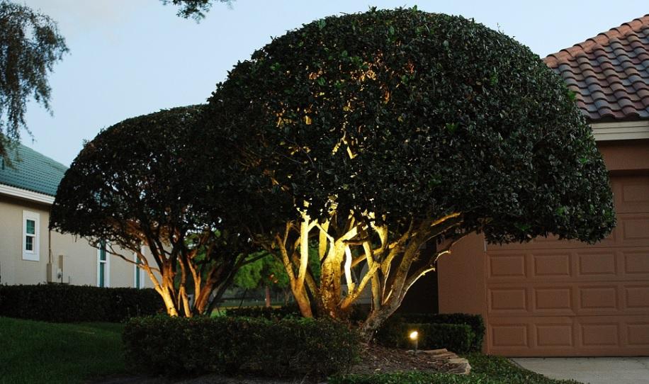 residential exterior low voltage landscape tree uplighting
