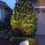 New Low-Voltage Landscape Lighting Installation