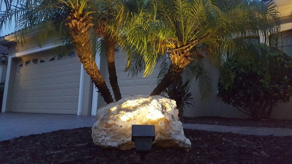 Low-voltage flood lighting for robellini palm tree