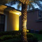 Low-Voltage landscape lighting on palm tree