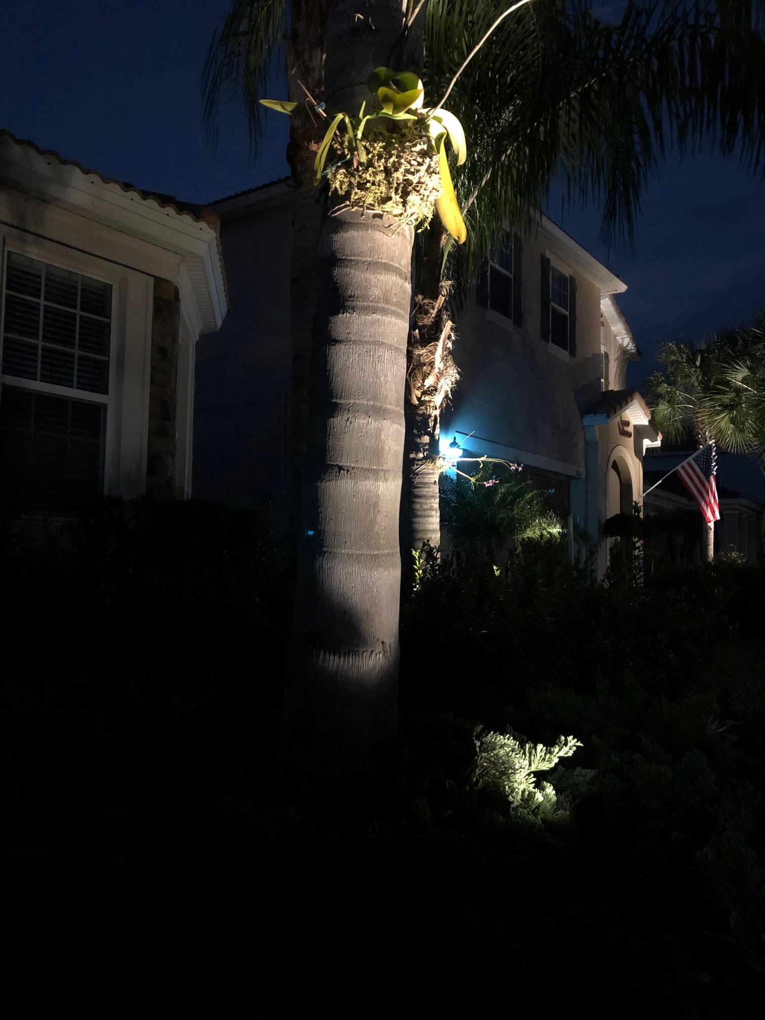 Up-lighting on Palm Trees in landscape lighting design