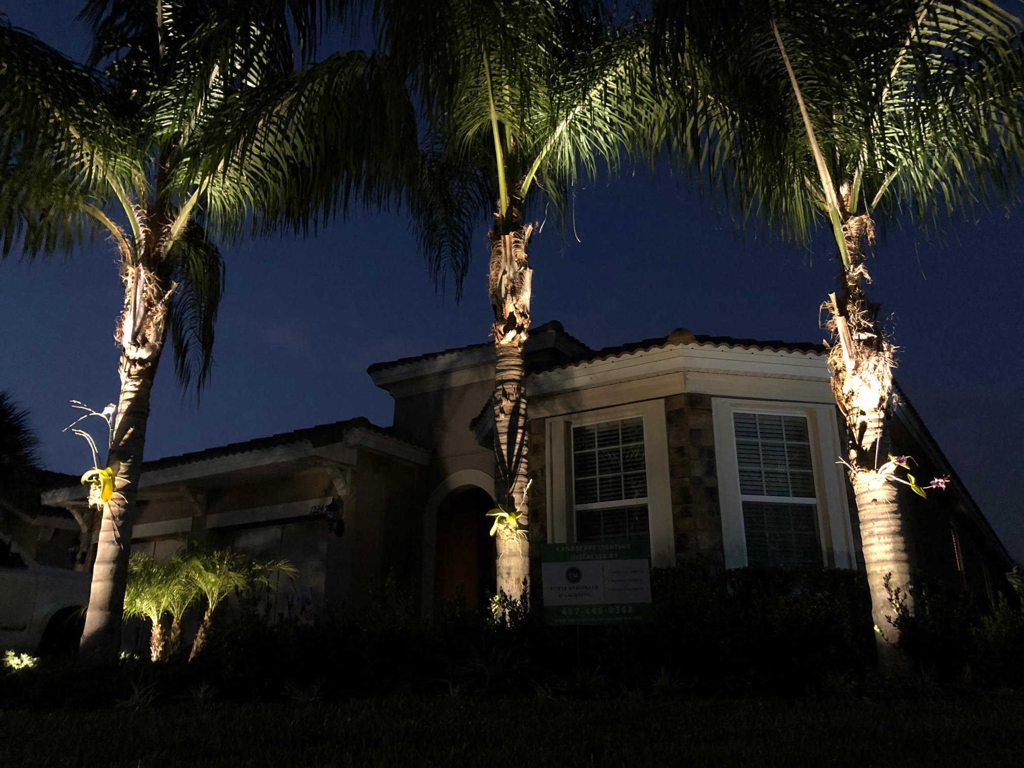 Up-lighting on Palm Trees in landscape