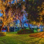 uplighting on oak trees