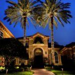 Uplighting on Palm Trees
