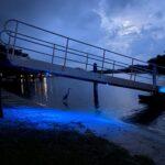 Dock lighting illuminating wading bird